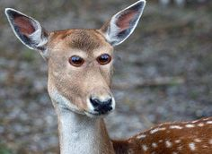 What animals would look like if they had eyes at the front