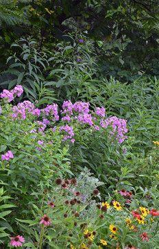 NY Ironweed