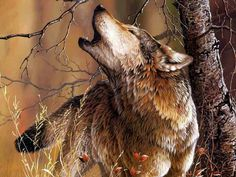 The photo captures the beautiful coloring on this magnificent wolf.