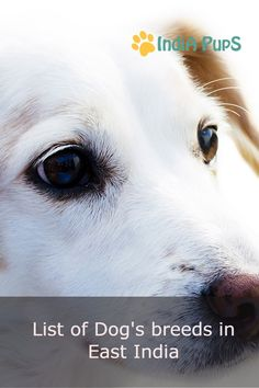 18 Best Kanni images | Dog photos, Beautiful dogs, Cute Dogs