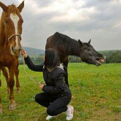 by http://ift.tt/1OJSkeg - Sardegna turismo by italylandscape.com #traveloffers #holiday | Se la ride fiona  #mylove#myhorse#sardinia#sardegna_super_pics#likeforlike#sardegna#volgosardegna#horses#smile#happy#loves_sardegna#sardegnaofficial#igersardegna#instasardegna#sardegnagram#vivosardegna#lanuovasardegna#unionesarda#horses_of_istagram#horseshow#instahorses#lovehorses#horses_showtime#focusardegna#sardegnacountry Foto presente anche su http://ift.tt/1tOf9XD | February 04 2016 at 07:09PM (ph…
