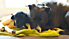 Lamb Rejected By His Mom Loves To Share The Dog's Bed