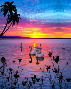 Calm Meditation, Meditation Music, Nikon Photography, Nature Photography, Krishna, Good Night All, Piano, Sunset Pictures, Sunset Pics