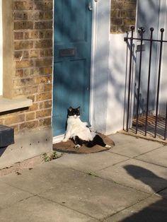 """Résultat de recherche d'images pour """"image chat au soleil"""""""
