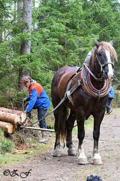 Work Horses, Draft Horses, Donkeys, Beautiful Horses, Loom, Gypsy, Strong, Training, Athletic