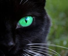 Stunning!  Black cat with green eyes   ...........click here to find out more     http://googydog.com