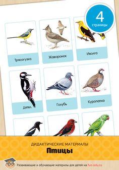 Пособие «Птицы» — картинки для детей детского сада. Оно пригодится воспитателям при составлении занятий темой которых является окружающий мир.