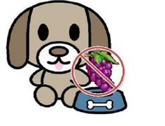 Did you know that grapes are toxic to dogs? Check out Dr. Antin's blog post on warning signs and what to do if your furry friend eats grapes!