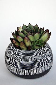 succulent + scraffito pot