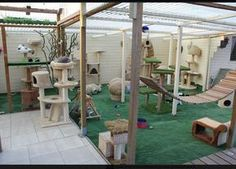 New ferret cage i want to do this some day and rescue ferrets again wooden outdoor cat play structure, best 25 outside cat enclosure ideas diy toys Animal Room, Hotel Gato, Cat Hotel, Dog Cage Outdoor, Outdoor Cats, Outdoor Play, Outdoor Ideas, Ferret Cage, Cat Cages