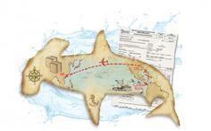 Hong Kong needs to step up checks on shark fin trade after Costa Rica shipments slip under radar