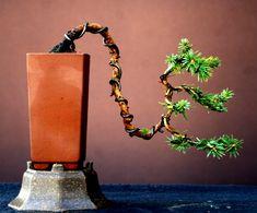 Cascade bonsai