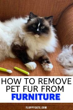 This is how to clean fur off couch | Cleaning Fur Off Couch | Getting Dog Fur Off Couch | Getting Cat Fur Off Couch | How to Keep Cat Hair Off Furniture | How to Keep Dog Hair Off Furniture | Clean Cat Fur Off Furniture | Pet Fur Off Furniture | How to Get Rid of Fur on Furniture | Cleaning With Pets | Animal and Pet Supplies | Cat Tips | Cat Supplies Couch Cleaning, Furniture Cleaning, Cute Cats And Kittens, Cool Cats, Cute Cat Names, Dog Psychology, Cat Food Brands, Best Cat Litter, Best Cat Food