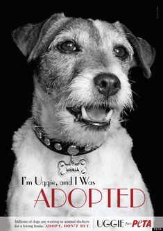 Uggie posing for PETA. Love this dog.