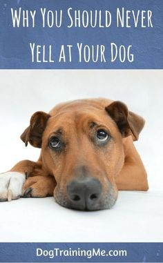Never yell at your dog. Do you know why? We take a look at some very good reasons why you shouldn't yell at your dog. We also give you some suggestions on what you can do instead of yelling to get through to your dog. Check out our article now. @KaufmannsPuppy