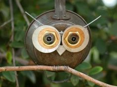 Frying Pan Owl