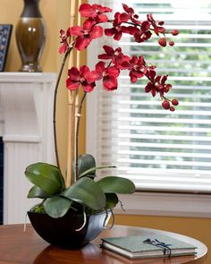 orchids are so exotic... I want one similar to this...