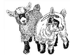 Two Pygmy Goats  Note Cards by Pat Showalter