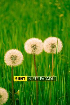SUNT NISTE PAPADI