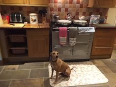 Holly the dog enjoy the warmth of the AGA at the pet-friendly Rowan House.