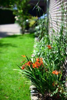 Plants next to walls: Crocosmia (Montbretia) Crocosmia, Gardens, Walls, Plants, Outdoor Gardens, Plant, Garden, House Gardens, Planets