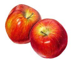 Braeburn Apples by Sigrid Frensen, via Flickr / Coloured pencil drawing (11 x 10 cm) on Fabriano Designo 5 Liscia paper.