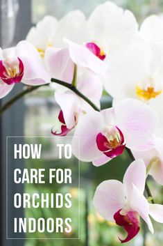 Check out my 5 Top tips to grow orchids indoor and my 5 Signs your orchid is in bad shape and how to fix them. The basic tutorial for growing orchids at home! Container Gardening Vegetables, Succulents In Containers, Container Flowers, Container Plants, Vegetable Gardening, Indoor Orchids, Orchids Garden, Indoor Plants, Potted Plants