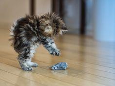 gatito-con-ratón