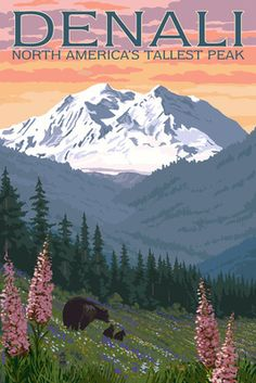 Denali, Alaska - North America's Tallest Peak - Bears & Spring Flowers…