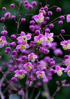 Flowers Pretty!!!