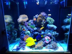 Orphek Reef aquarium lighting