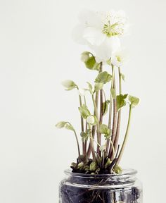 glass jar planters.  tumblr_inline_mfcre1vJUC1qau50i.jpg 500×611 pixels