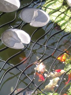 Water Lily Pond Cover keeps the critters from stealing the fish