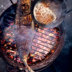 Braaied whole yellowtail with a sticky orange honey and ginger dressing Braai Recipes, Barbecue Recipes, Fish Recipes, Seafood Recipes, Yellowtail Recipe, Campfire Food, Time To Eat, Outdoor Cooking, Cooking