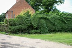 Norfolk Gardener spends 10 years turning his hedge into 100 foot Dragon