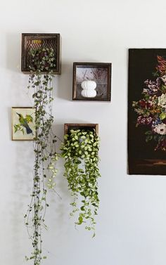 A pair & a spare | HOW TO indoor plants