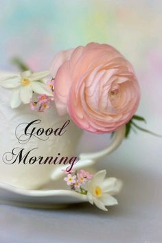 Good Morning Images Hd, Good Morning Picture, Morning Pictures, Good Morning Greetings, Good Morning Wishes, Good Morning Tuesday, G Morning, Happy Morning, Good Morning Friends Quotes