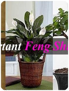 Feng Shui Tips for Your Home Office Feng Shui Home Office, Feng Shui Tips, Office Desk, Creative, Plants, Desk Office, Desk, Planters, Office Desks
