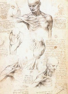 The Renaissance scholar Leonardo da Vinci (1452-1519) was known for his interest in anatomy. He dissected several corpses, and made over 200 drawings based on what he saw.