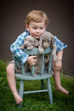 Boy & puppies
