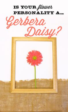 #lonestarliving Are you a Gerber Daisy flowers? You tend to be a happy, warm, and approachable person whose mere presence can light up a room like the sun. You have a colorful personality and are most likely the daredevil of all your friends. Share with us your flower personality for a chance to win $100 VISA gift card.