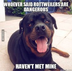 The dog's personality depends on the owner, not the breed! Funny Dog Memes, Funny Dogs, Cute Puppies, Dogs And Puppies, Rottweiler Funny, Animals Of The World, Big Dogs, Dog Life, Best Funny Pictures