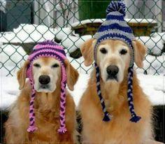 Crocheted dog hats