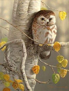 owl and fall tree