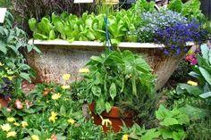 Alte Badewanne bepflanzen - kreative Idee für Gartendeko