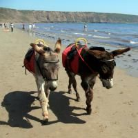 donkeys on the beach - reminds me of visiting my Grandad as a child & going for donkey rides on Mablethorpe beach.