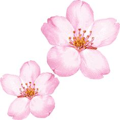 Google Image Result for http://4.bp.blogspot.com/_ue2_vDGeEV8/TFYYgkatB2I/AAAAAAAACLE/CxPEjnTC6lg/s1600/cherryblossomclipart.gif