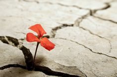 How to encourage post-traumatic growth in your clients