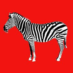Quadro-moderno-pop-art-stampa-su-tela-casa-camera-bambini-zebra-arredamento