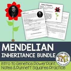 Punnett Squares - Mendel and Inheritance - Distance Learning Biology Lessons, Science Biology, Teaching Biology, Science Lessons, Life Science, Teaching Resources, Teaching Ideas, 7th Grade Science, Middle School Science